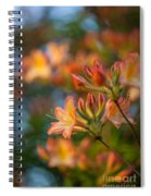 Painterly Rhodies Spiral Notebook