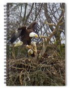 Pair Of Bald Eagles At Their Nest Spiral Notebook