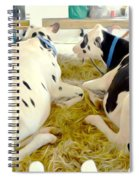 Pair Of Black And White Cows 3 Spiral Notebook
