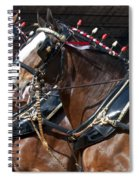 Pair Of Budweiser Clydesdale Horses In Harness Usa Rodeo Spiral Notebook