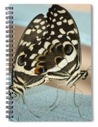 Pair Of Citrus Swallowtail Butterflies  Spiral Notebook