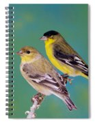 Pair Of Lesser Goldfinches Spiral Notebook