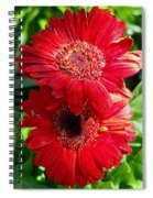 Pair Of Red Gerber Daisy Flowers With Ladybug Spiral Notebook