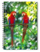 Pair Of Scarlet Macaws Spiral Notebook