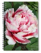 Pale And Dark Pink Peony Spiral Notebook