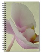 Pale Orchid On Cream Spiral Notebook