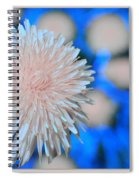 Pale Pink Bright Blue Spiral Notebook