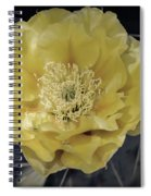 Pale Yellow Prickly Pear Bloom  Spiral Notebook