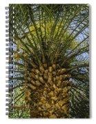 Palm Sky Spiral Notebook