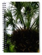 Palm Tree In Curacao Spiral Notebook
