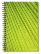 Palm Tree Leaf Abstract Spiral Notebook