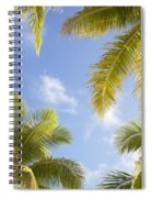 Palms And Sky Spiral Notebook