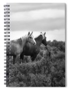 Palomino - Buttes - Wild Horses - Bw Spiral Notebook