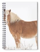 Palomino Horse In The Snow Spiral Notebook