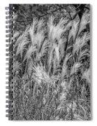 Pampas Grass Monochrome Spiral Notebook