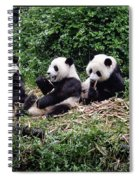 Pandas In China Spiral Notebook