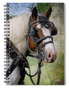Pandora In Harness Spiral Notebook