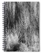 Panorama Winter Trees B And W Spiral Notebook