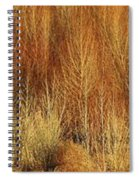 Panorama Winter Trees Color Spiral Notebook
