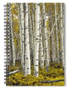 Panoramic Birch Tree Forest Spiral Notebook