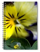 Pansy Close Up Spiral Notebook