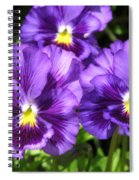 Pansy From The Chalon Supreme Primed Mix Spiral Notebook