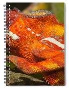 panther chameleon from Madagascar 3 Spiral Notebook