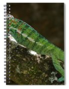 panther chameleon from Madagascar 5 Spiral Notebook