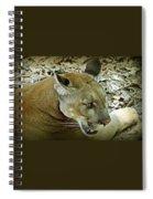 Panther Spiral Notebook