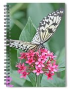 Paper Kite Butterfly - 2 Spiral Notebook