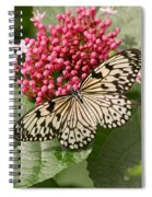 Paper Kite Butterfly Spiral Notebook