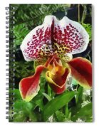 Paph Fiordland Sunset Orchid Spiral Notebook