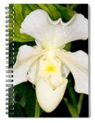 Paphiopedilum Orchid Spiral Notebook
