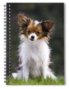 Papillon Dog Spiral Notebook