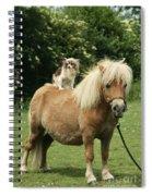 Papillon Riding Shetland Pony Spiral Notebook