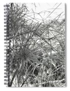 Papyrus Black And White Spiral Notebook