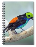 Paradise Tanager Spiral Notebook