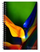 Pardise Birds Spiral Notebook