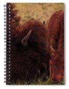 Parent With Newborn Calf Bison Spiral Notebook