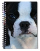 Party Girl Spiral Notebook