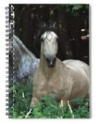 Paso Fino Mares Pay Attention Spiral Notebook