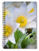 Pasque Flower Spiral Notebook