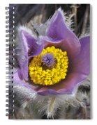 Pasque Flower Pulsatilla Halleri Spiral Notebook