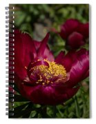 Passion For Red Spiral Notebook