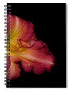 Passionate Lily 20 Spiral Notebook