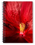 Passionate Ruby Red Silk Spiral Notebook