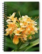 Pastel Peach Petals Spiral Notebook