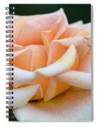 Pastel Peach Rose Spiral Notebook
