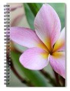 Pastel Pink Plumeria Spiral Notebook