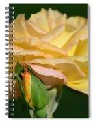 Pastel Rose Ruffles Spiral Notebook